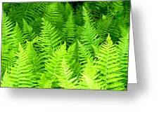 Ferns Galore Filtered Greeting Card