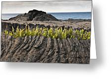 Ferns Growing From A Crack In The Lava Greeting Card