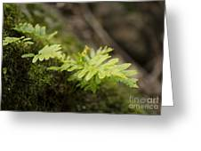 Ferns In Forest Greeting Card