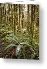 Ferns Sit On The Forest Floor Greeting Card