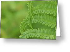Ferns Take A Bow Greeting Card