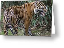 Ferocious Tiger Greeting Card by Brendan Reals