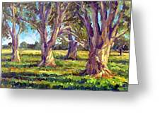 Ficus Trees Greeting Card