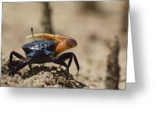 Fiddler Crab Living In A Sandy Tidal Greeting Card