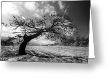 Field At Rest Greeting Card
