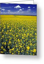 Field Of Canola Greeting Card