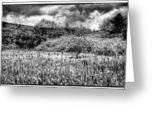 Field Of Cattails II Greeting Card