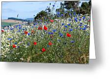 Field Of Colour Greeting Card