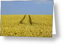 Field Of Corn Greeting Card