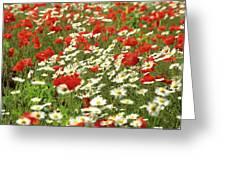 Field Of Daisies And Poppies. Greeting Card by Bernard Jaubert