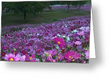Field Of Flowers Along The Highway  Greeting Card