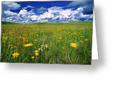 Field Of Flowers, Grasslands National Greeting Card