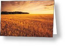 Field Of Grain Stubble Near St Greeting Card