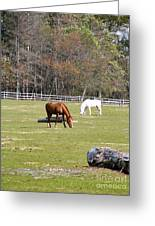Field Of Horses Greeting Card