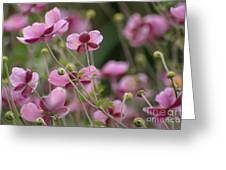Field Of Japanese Anemones Greeting Card