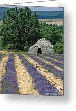 Field Of Lavender. Sault Greeting Card