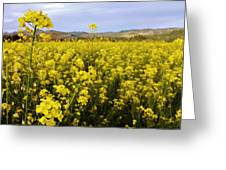 Field Of Mustard Flowers Greeting Card