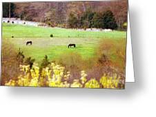 Field Of My Dreams Horses Greeting Card