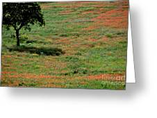 Field Of Poppies. Greeting Card