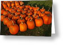 Field Of Pumpkins Greeting Card