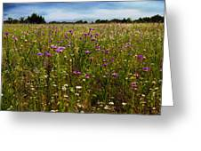 Field Of Thistles Greeting Card