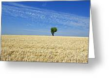 Field Of Wheat In Provence Greeting Card