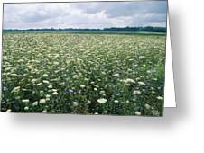 Field Of Wildflowers, Montezuma Greeting Card