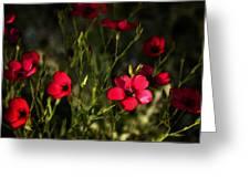Field Of Wildflowers  Greeting Card