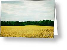 Field Of Yellow Wildflowers Greeting Card