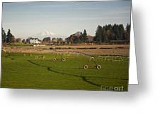 Field With Irrigation Pipes Greeting Card by David Buffington