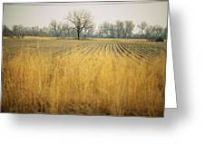 Fields At The Lillian Annette Rowe Bird Greeting Card