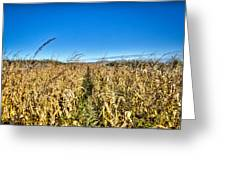 Fields Of Gold Greeting Card by Dan Crosby