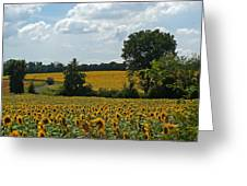 Fields Of Sunflowers Greeting Card