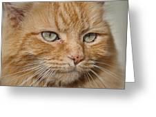 Fierce Warrior Kitty Greeting Card