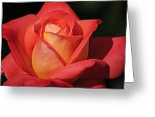 Fiery Color Rose Greeting Card