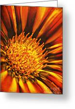Fiery Passion Greeting Card
