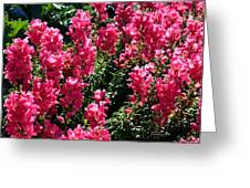Fiery Pink Greeting Card