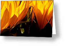 Fiery Sunflowers Greeting Card