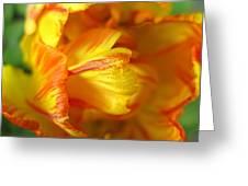 Fiery Tulip Greeting Card
