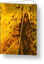 Fig Leaf Greeting Card