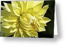 Figaro Yellow Dahlia Greeting Card
