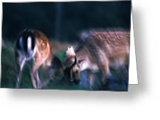 Fighting Fallow Deer Greeting Card