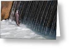 Fighting Upstream Greeting Card