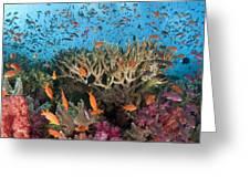 Fiji Reef Riot Greeting Card