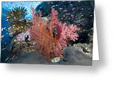 Fiji Sea Fan Scenic Greeting Card