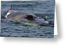 Fin Whale Charging Greeting Card