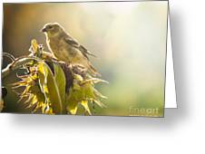 Finch Aglow Greeting Card