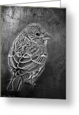 Finch Black And White Greeting Card