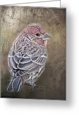 Finch Low Saturation Greeting Card