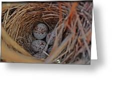 Finch Nest With Eggs  Greeting Card